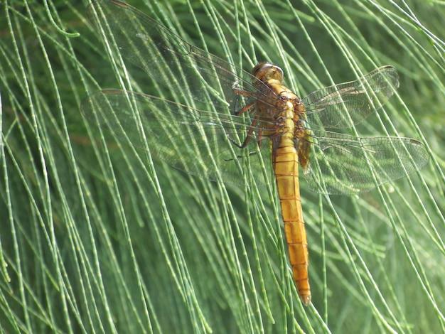 Plan macro sur une libellule sur un feuillage vert