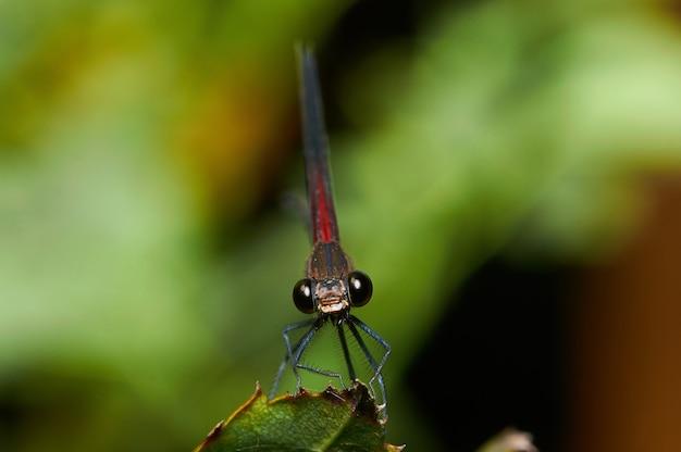 Plan macro d'une libellule sur une plante verte