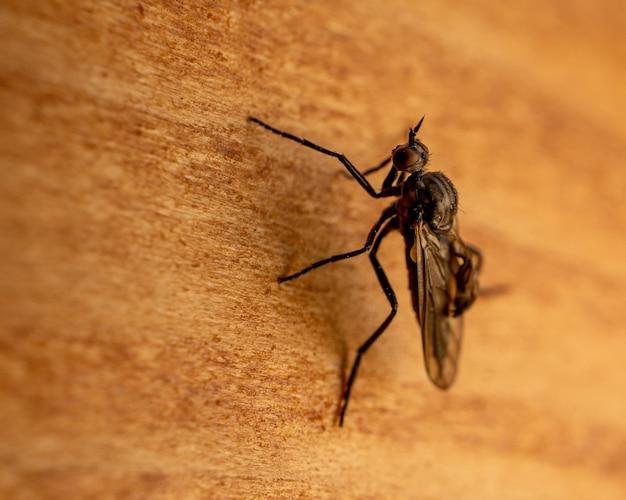 Plan macro sur une mouche stable sur une surface en bois