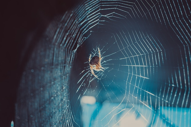 Plan macro sur la toile d'araignée et le vol dans les rayons lumineux particules de poussière dans le piège à mouches du soleil