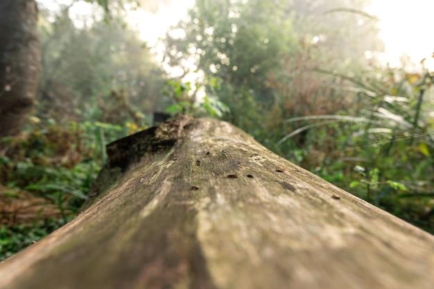 Plan macro sur une vieille bûche parmi la forêt, arrière-plan flou.