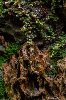 Plan de mousse verte fraîche dans la serre sur un arrière-plan flou avec mise au point sélective. la photo a été prise dans le jardin botanique. moscou, russie.