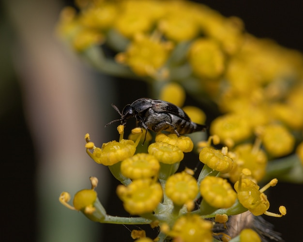 Plan rapproché d'un petit insecte sur une fleur jaune dans un champ sous la lumière du soleil
