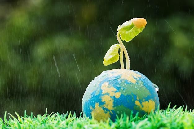 Plan de semis sur globe d'argile