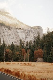Plan vertical d'un champ avec de grands arbres et une montagne rocheuse