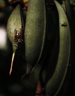 Plan vertical de feuilles de plantes avec des insectes perchés dessus