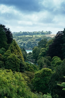 Plan vertical d'une forêt épaisse et d'une rivière