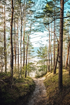 Plan vertical de hauts arbres dans la forêt