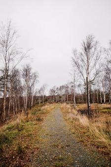 Plan vertical d'un sentier au milieu d'une forêt avec des arbres sans feuilles sous un ciel nuageux