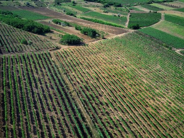 Plan de vignobles dans un village