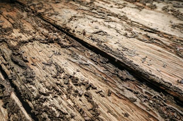 Planchers de bois endommagés par les termites le bois endommagé pourri est mangé par les termites parce que les termites préfèrent