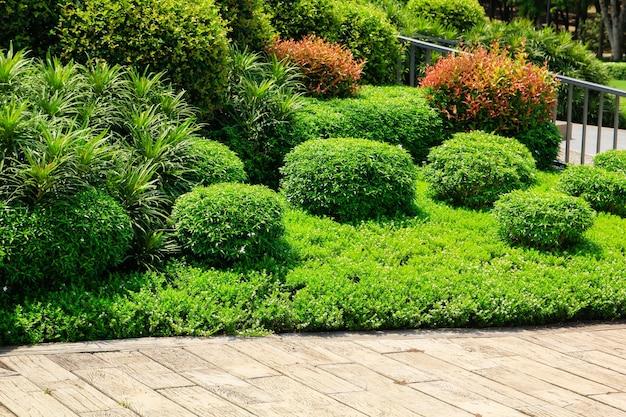 Planchers de bois franc ou plancher de ciment et plante dans le jardin