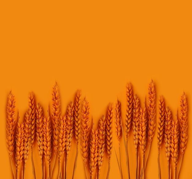 Plant d'épillets orange colorés