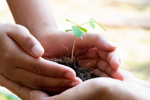 Plant de germination et sol tenant dans les mains. la croissance et la prévention des arbres par l'homme.