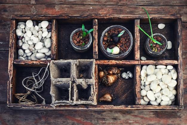 Plant de semis en boîte