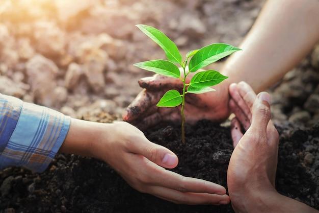 Plantation d'arbres de protection des agriculteurs à trois mains sur sol avec soleil dans le jardin