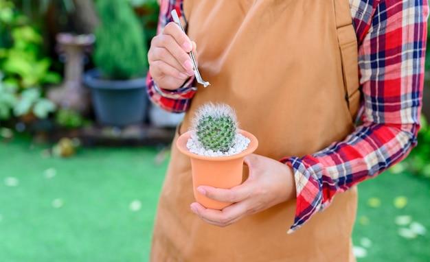 Plantation de cactus et arbre en croissance. activité de jardinage et de loisirs au jardin botanique.