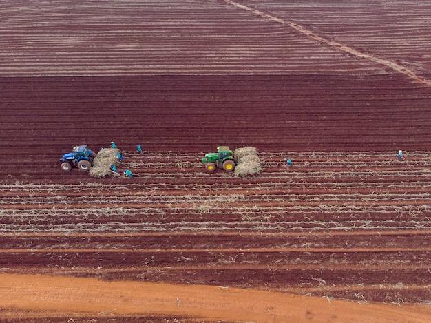 Plantation de canne manuelle. hommes sous le soleil brûlant plantant une canne avec leurs mains - pederneiras-sao paulo-brasil - 20/03/2021.