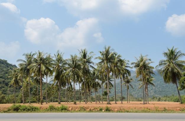 Plantation de cocotiers le long d'une route de campagne