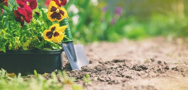 Plantation d'un jardin fleuri, printemps été. mise au point sélective.