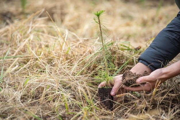 Plantation de jeunes arbres pour la régénération forestière après intervention d'éléments naturels