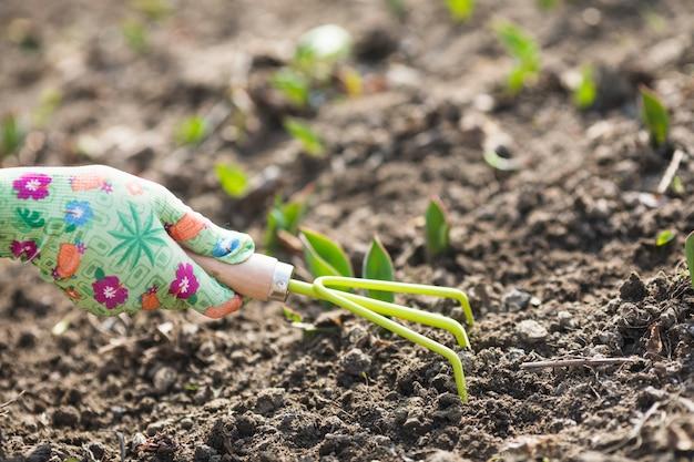 Plantation des mains