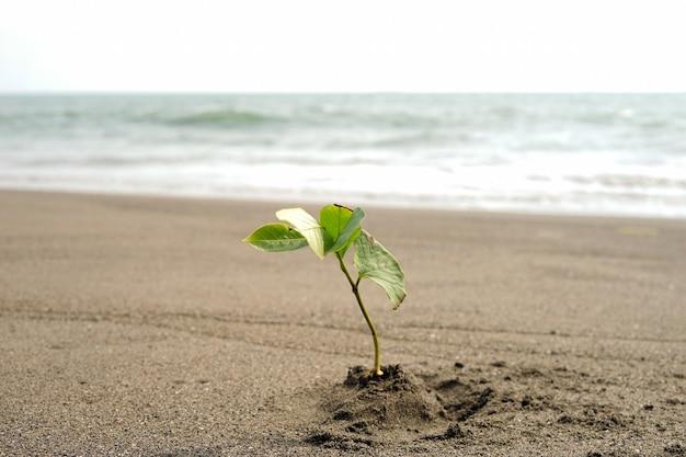 Une plantation de mangrove sur la plage