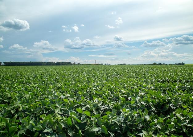 Plantation de soja