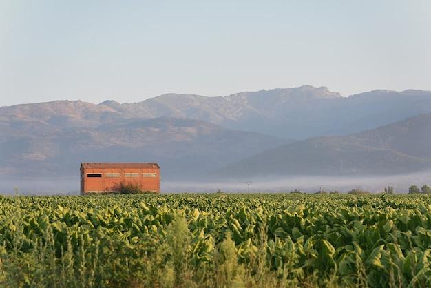 Plantation de tabac avec hangar de séchage dans la vallée au lever du soleil