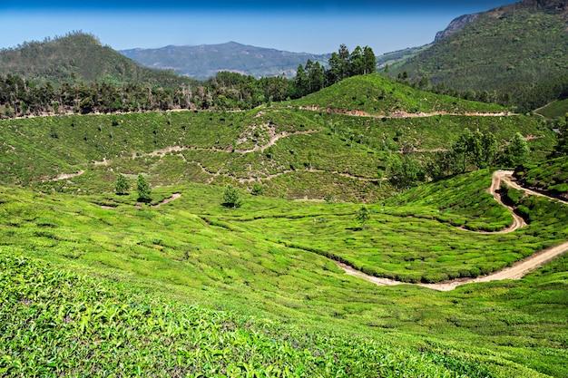 Plantation de thé à munnar