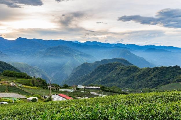 Plantation de thé et nature de montagne à taiwan