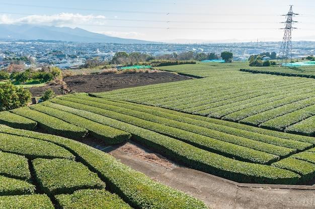Plantation de thé vert vue aérienne de la ville de fuji shizuoka ken japon