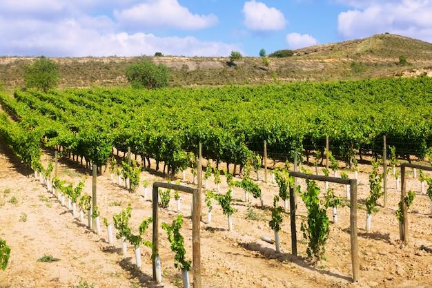 Plantation de vignobles. la rioja