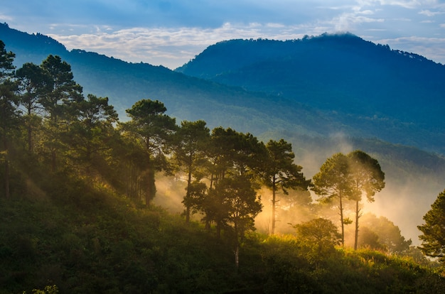 Les plantations de fraises du matin ont une mer de brouillard ang khang chiang mai thaïlande