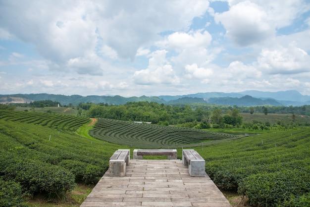 Plantations de thé vert, champ de thé vert et siège pour regarder la vue