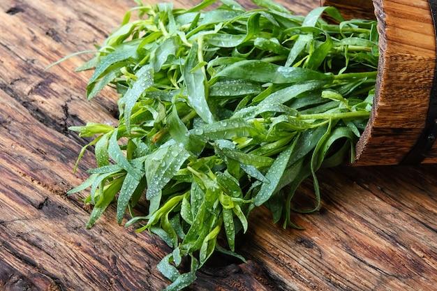 Plante d'absinthe estragon