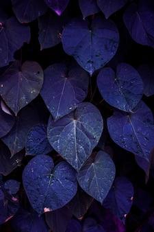Plante bleue laisse dans le jardin