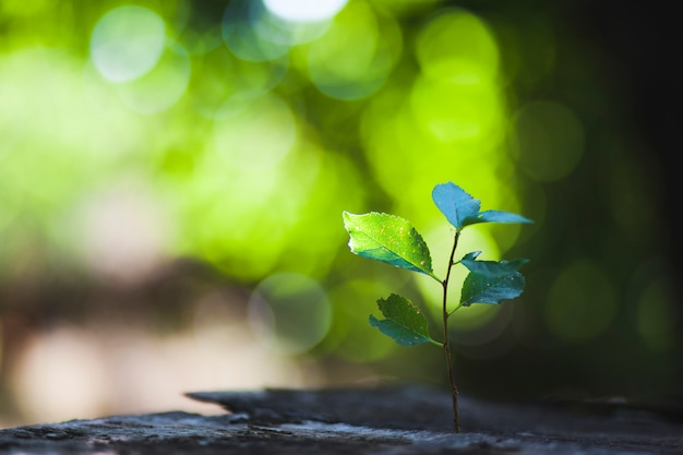 Plante sur bois