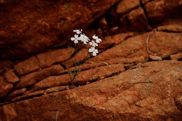 Plante de couleur blanche poussant à l'intérieur de la roche brune