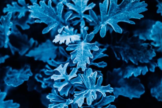 Plante de couleur bleu classique. fond à la mode. couleur de l'année.