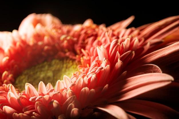 Plante de couleur corail gros plan