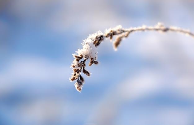 Une plante couverte de glace et de neige sur un fond bleu d'hiver