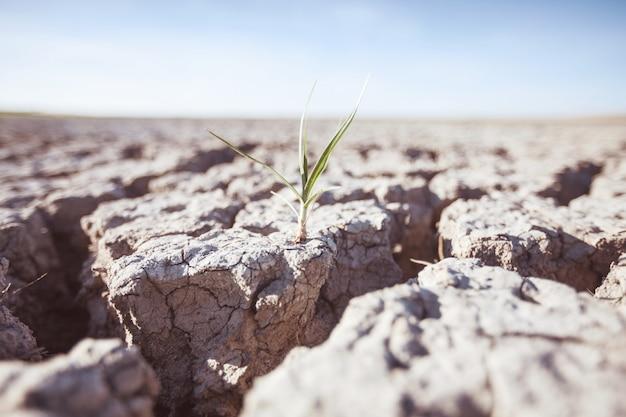 Plante en croissance sur des terres sèches