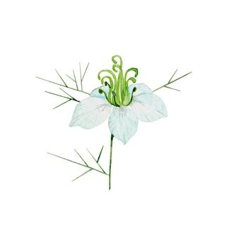 Plante de cumin aquarelle