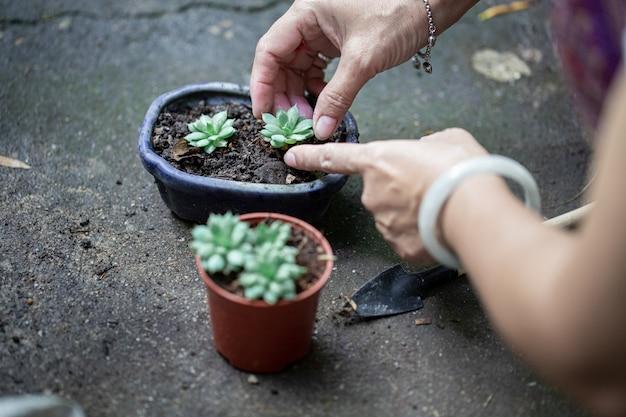 Sur une plante dans un pot à la main
