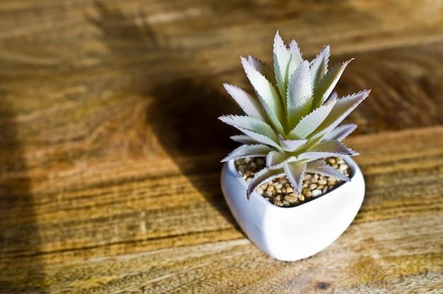 Plante domestique - cactus blanc succulent dans un pot blanc. vue de côté
