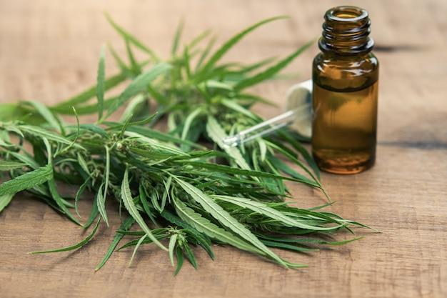 Plante et feuilles de cannabis avec extraits d'huile dans des bocaux.