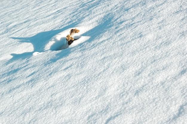 Plante flétrie dans la neige après le blizzard. flou sélectif, vertical.