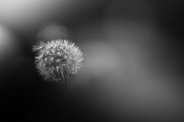 Plante fleur et pissenlit