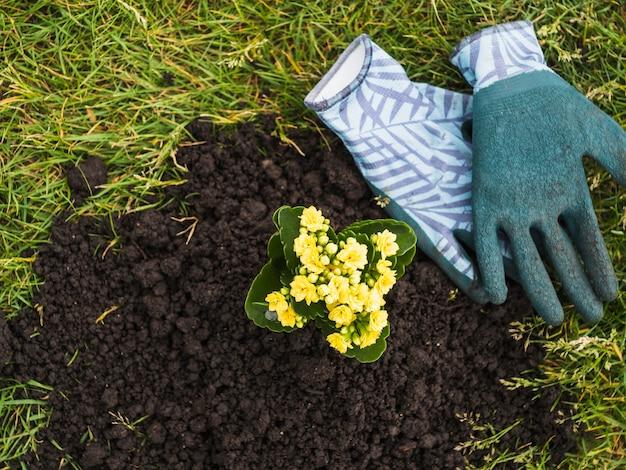 Plante fleurie succulente dans le sol